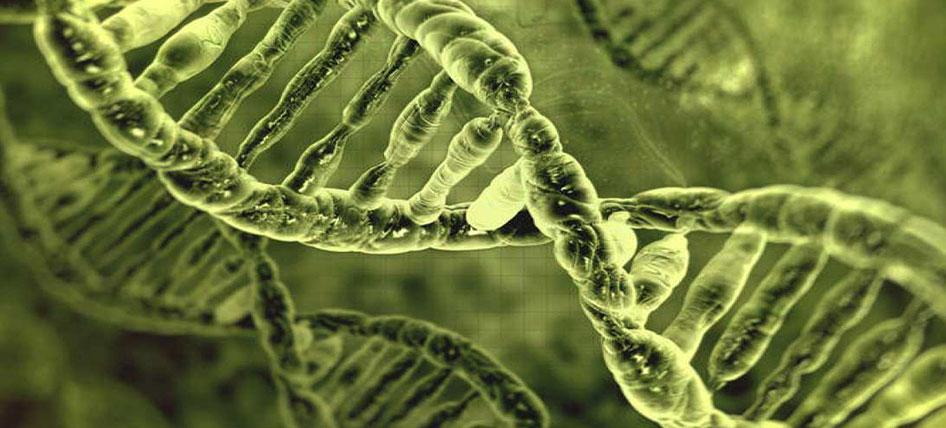 genetica-del-oido-2-GA