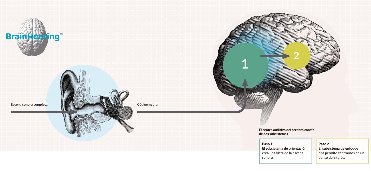 brain-hearing-GA